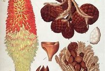 Ernst Haeckel and more drawings / by Ans Bakker