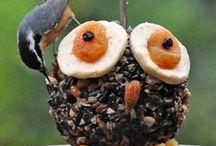 Vogelvoerplek