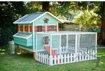 Coop Scoop / Chicken coop ideas and chicken care.
