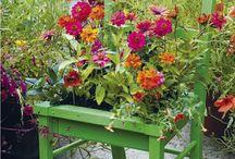 Plantenbakken / Ideetjes voor plantenbakken vredebest