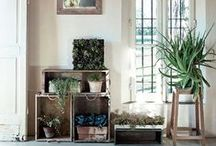 = Jungle interior = / Jungle interior - La tendance exotique dans la maison