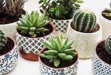 Succulents & house plants.