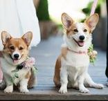 Pets on wedding day! / The cutest of dogs, cats, and all kinds of critters on the big day!