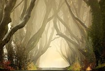 Dream Destinations / by Chelsea