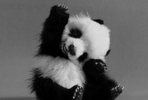 Cute Animals / Adorable Animal Pictures to make you go aaahhh. / by Mel Scifi