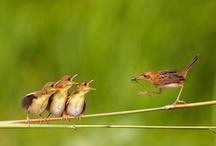 Beautiful Birdies / by Mel Scifi