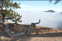 520 Sunrise Peak / Crystal Park CO Manitou Springs Home for sale