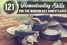 Happy Homestead / Homesteader ideas, tips, and tidbits