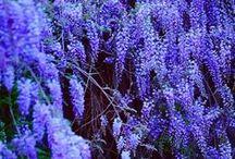 Gardening. / by Kenzie Schrock  | Kenzie's Adoornments