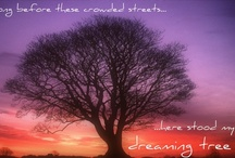 the dreaming tree / long before these crowded streets, here stood my dreaming tree -DMB