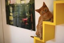 Cats! / by Sarah Jenny
