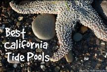 California Kids / Travel ideas for families and kids