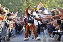 War Eagle / Auburn Tigers / by AL.com