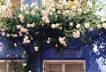 La Fleur / by Ellis Home and Garden