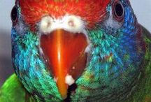 Flights of fancy / parrots,birds of paradise,feathers,colours,inspirations