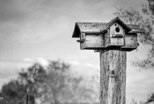Bird Houses / Ideas and inspiration