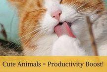 Unique Productivity Hacks
