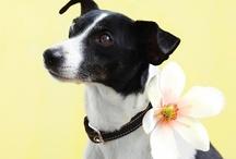 love & a {dog} / by Fallon Price