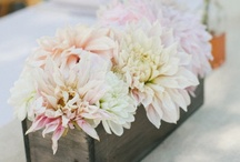 wedding {inspirations} / by Fallon Price