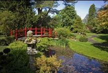 Gardens of Ireland / Experience Ireland's rare and beautiful botanical treasures.  / by Tourism Ireland