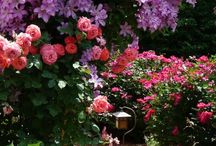 Flowers  / by Kaylin Erbe