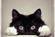 Katzen.