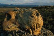 Paleontology & Paleobotany