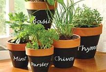 Great Outdoors / Gardening, Landscaping, Ideas on what to do with my yard, and a few diy flower pots and planters