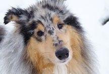 dog <3 / by Needle & Felt
