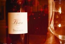 Le domaine de la Brillane / Domaine viticole en agriculture biologique en Provence / by La Brillane Aix en Provence