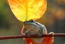 Frogs! / by Connie