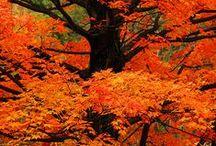 Autumn Orange / by Connie