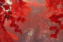 Autumn Red / by Connie