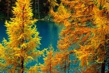 Autumn Turquoise / by Connie