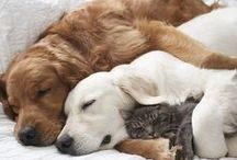 amours d'animaux chats et chiens