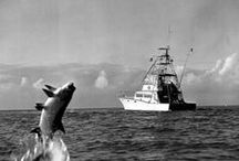 Hooked: Florida Maritime / When you have a state that's surrounded by an ocean & has ample rivers, swamps, lakes and streams in between, it's hard not to have a rich heritage and culture surronding maritime life. Follow this board for everything from fish to fishing, boats, birds, treasure hunters & all things nautical.    Explore more from the Florida Photographic Collection and other collections from the State Library & Archives of Florida, including video, audio, educational resources and more at FloridaMemory.com. / by Florida Memory