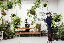 Great Growing Green  / Green, flower, pretty compositions, annual, blossom, bud, cluster, efflorescence, floret, floweret, head, herb, inflorescence, perennial, pompon, posy, shoot, spike, spray, vine, google / by Tanja Heikkilä