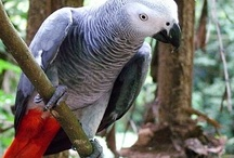 For the Amazing Animals I Love