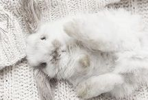 BUNNIES / Pictures of bunnies...need I say more? :)