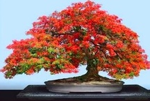 Bonsai Beautiful