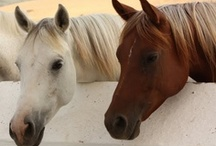Horses / by Stephanie Ford