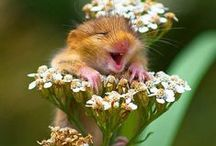 Happiness is....... / by Liz Vetter