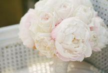 Weddings / by Shauna Rooke-Meyer