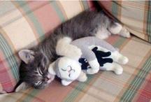 kitties! :3