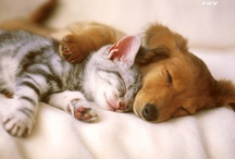 I <3 Animals  / Pics of super cute pets and beautiful animals. / by Jane Brown