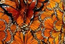 """Monarch / Inspirational pics for a work-in-progress currently dubbed """"Monarch""""."""