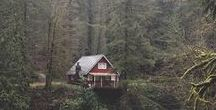 Into the Wild. /  Future cabin and woodland life.