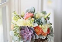 Fresh Flowers <3 / by Jennifer Northcutt