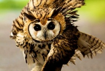 Owls are so adorable