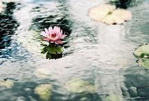 natural beauty / by akeena